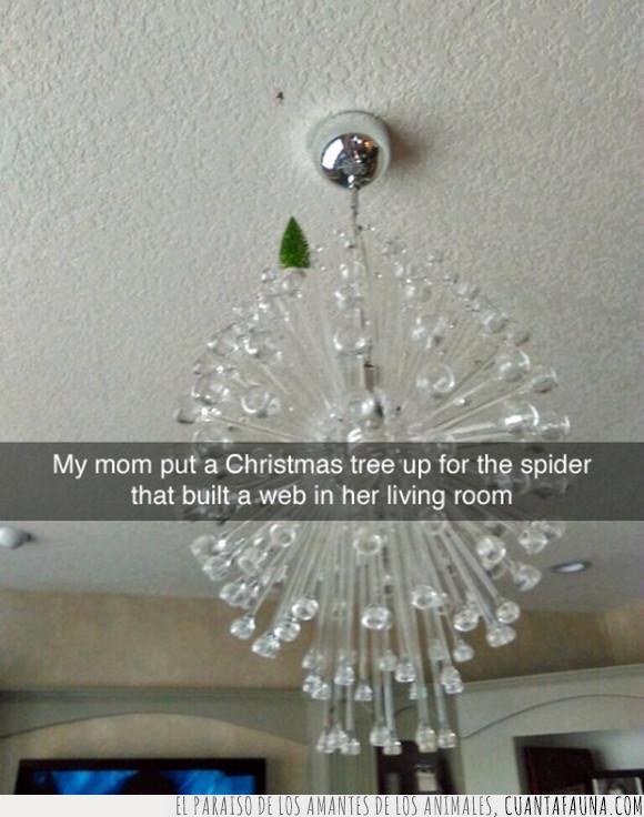araña,árbol de navidad,celebración,navidad
