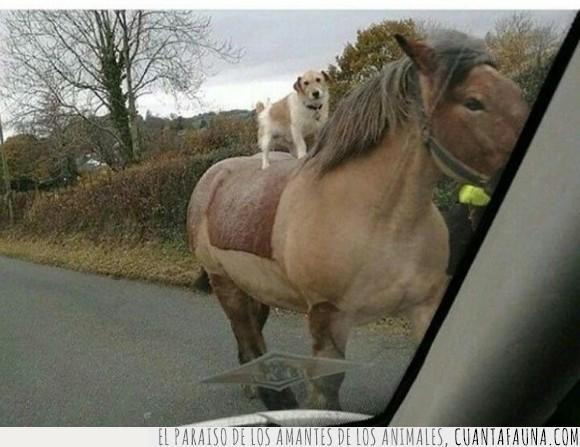 caballo,jaja,montar,perro,wtf