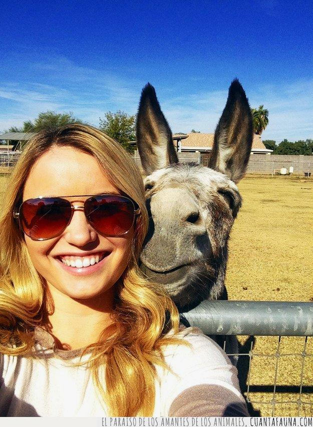 burro,cara,enamorados,establo,feliz,foto,ojos,selfie,sonreír