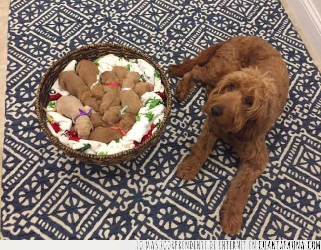 cachorros,cesta,crías,hijos,madre,navidad,parir,perro,regalos