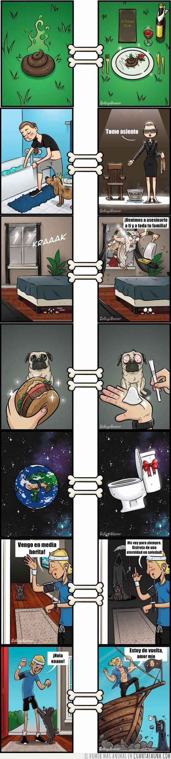 perros,puntos de vista,vida,vista