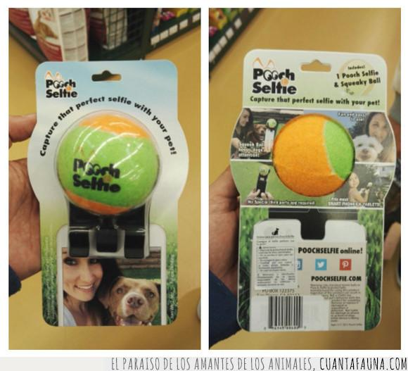cámara,fotos,perro,pooch selfie