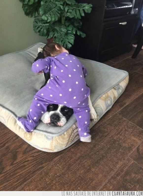jaja,niña,perro,subir