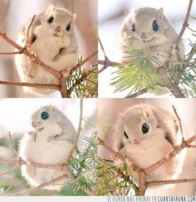 animal,árbol,blanco,hokkaido,irreal,japón,ojos,peludo,ramas