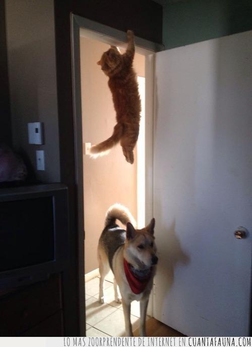 buscar,cara,entrada,esconderse,gato,mirada,perro,puerta
