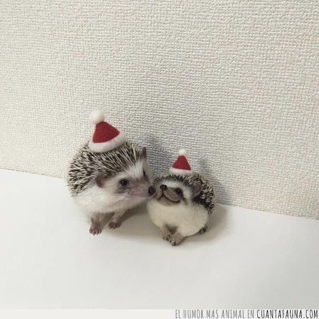 erizo,listos,navidad,recibir,sombrero,sonríen