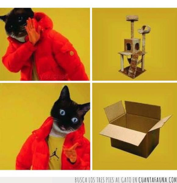 caja,gato,juguetes