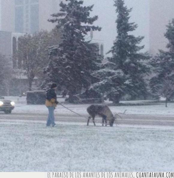 canadiense,jaja,mascota,nieve,reno,wtf