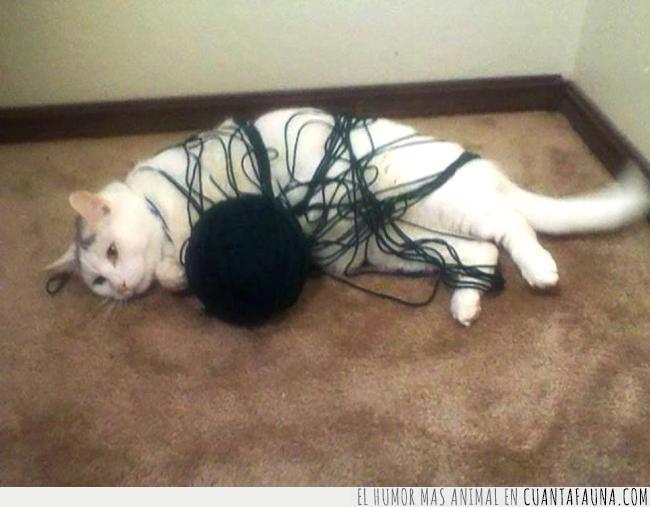 aquí,bola,errores,gato,hilo,lana,negra,pensar,tumbar,vida