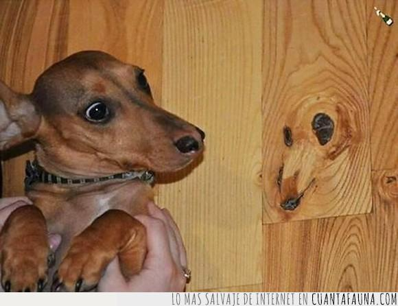 can,cartel,humor,imagen,madera,ojos,perro