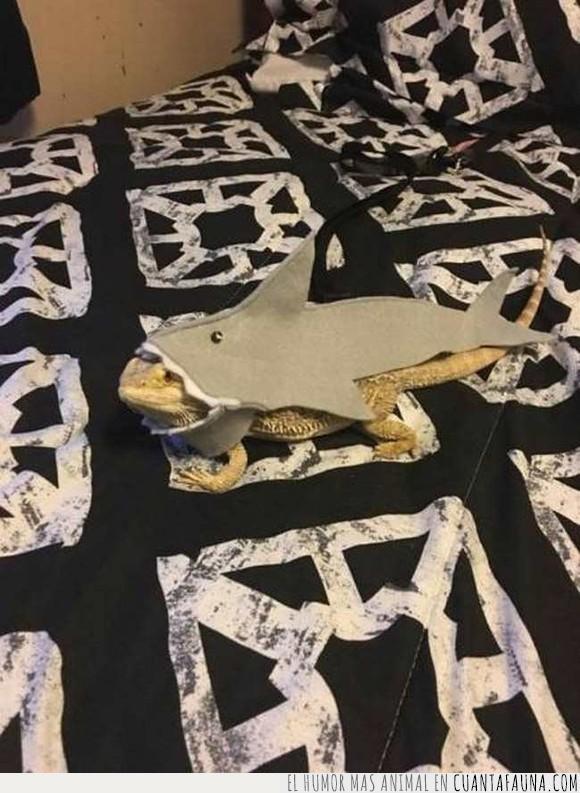 disfraz,iguana,jaja,tiburon