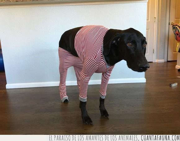 navideño,perro,pijama