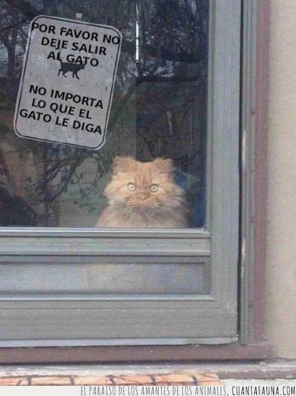 elegancia,felino,fotografía,gato