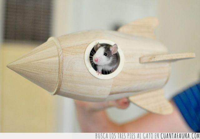 cohete,espacio,explorar,exterior,madera,ratón,valiente