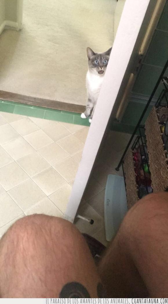 gatos,lavabo,mirar,mirones,wc