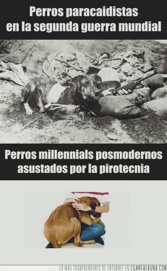 asustar,explosión,paracaídas,perros,segunda guerra mundial