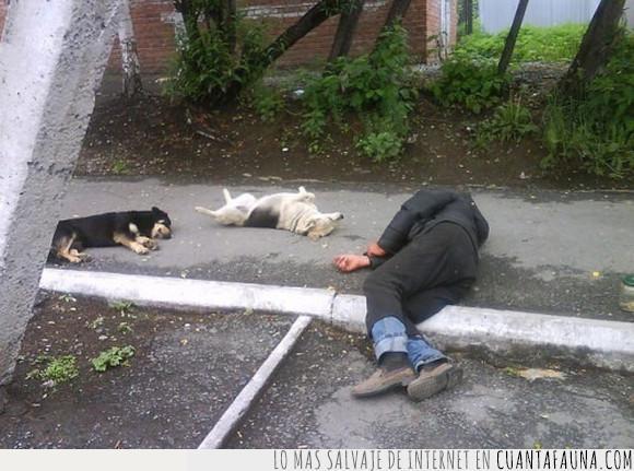 dormir,hombre,perros,siesta