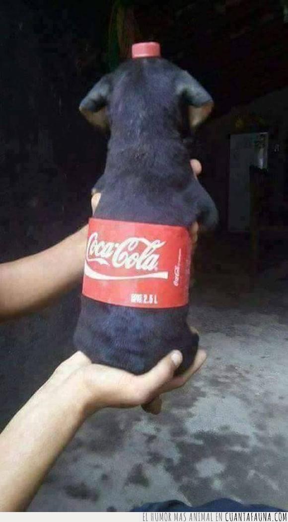 china,cocacola,cola,perro