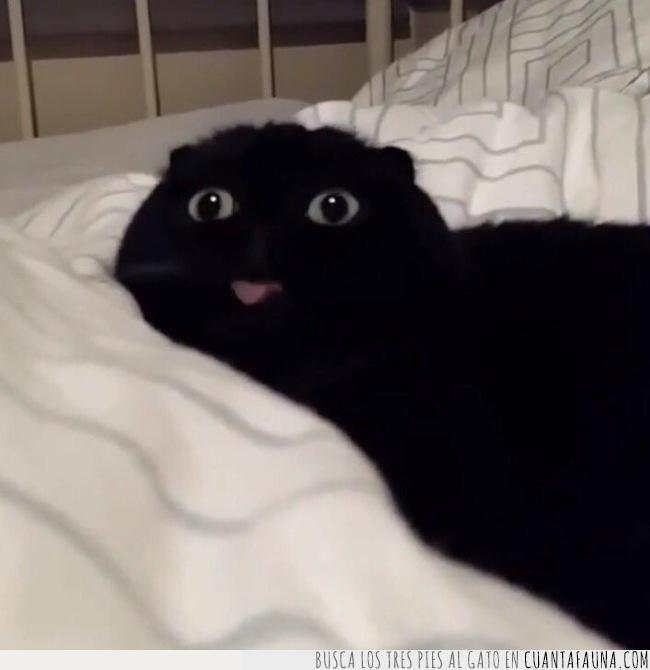 afrenta,cara,gato,lengua,negro,ojos,personal,rosa,sacar