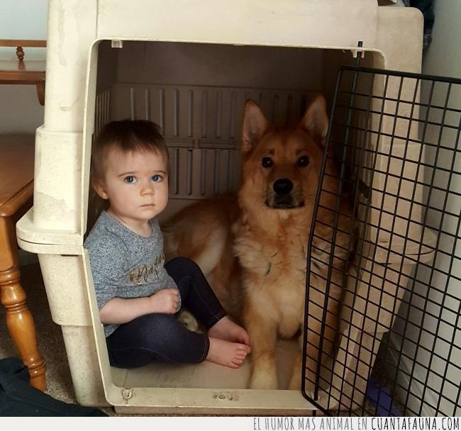 algo,importante,interrumpir,jaula,mirar,niño,perro