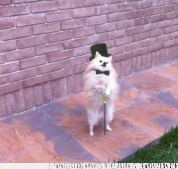 perro,señorito