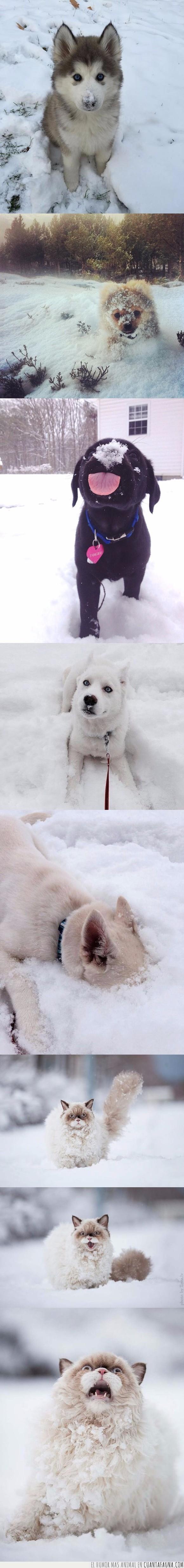 gastos,nevar,nieve,perros