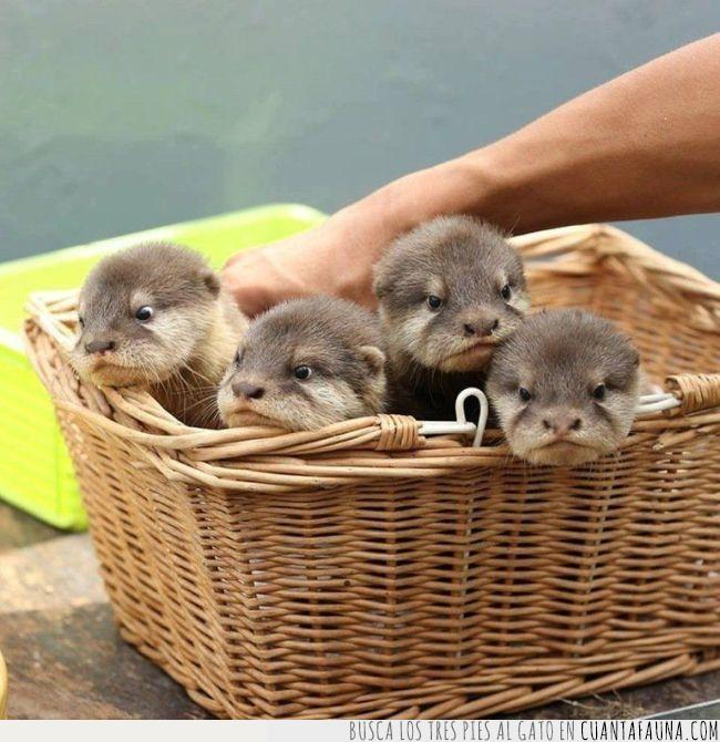 ayudar,bien,cesta,crías,día,empezar,nutrias