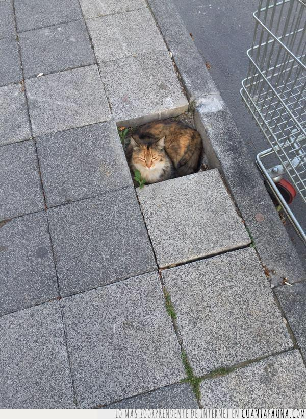 agujero,baldosa,ciudad,dentro,encajar,gato,hueco,impuestos,pagar,pavimento,suelo