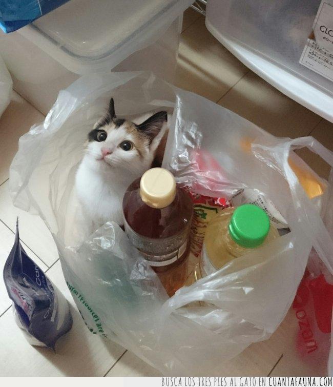 bebidas,bolsa,botellas,compra,gato,meter,recordar