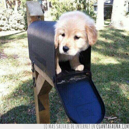 buzón,cachorro,carta,envío,llegar,paquete,urgente