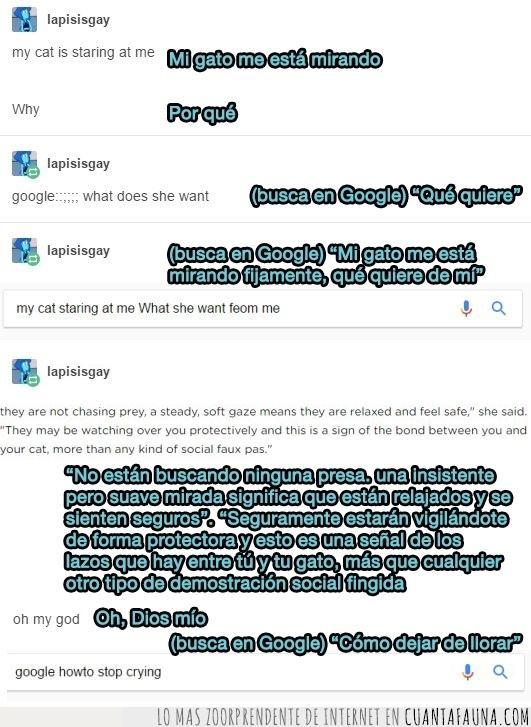 buscar,gato,google,historia,llorar,mirar,respuesta,significado,tener
