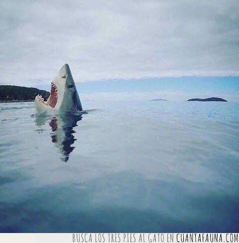 algo,asustar,cara,gritar,miedo,nadar,pies,rozar,susto,tiburón