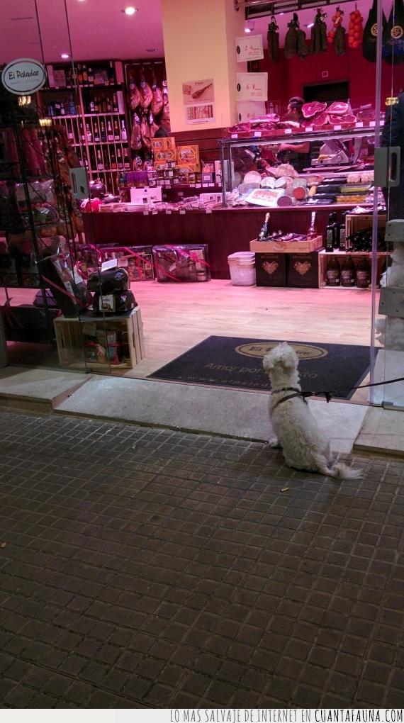 atado,calle,compra,correa,esperar,fuerza,jamón,perro,tienda,voluntad
