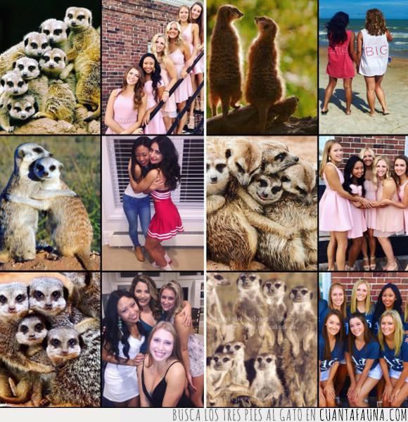 fotos,postureo,suricatas