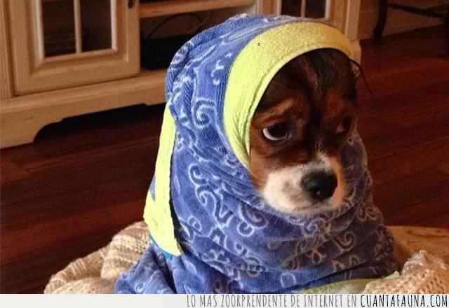 baño,cara,envolver,frío,toalla,triste