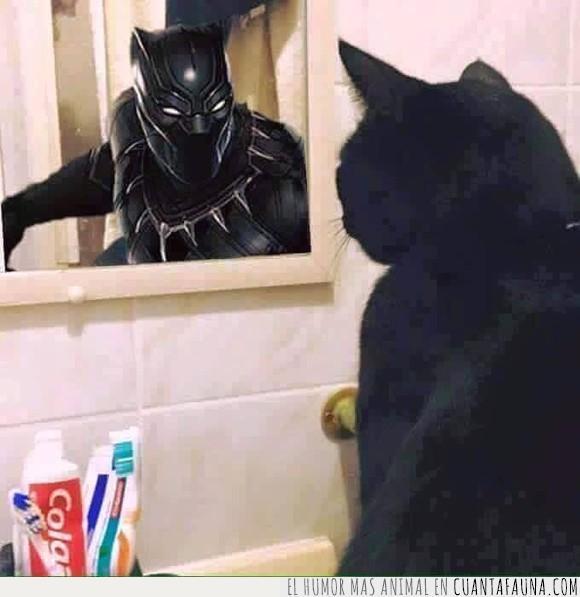 cómic,elegancia,félido,felino,fotografía,gato,Pantera Negra,superheroe