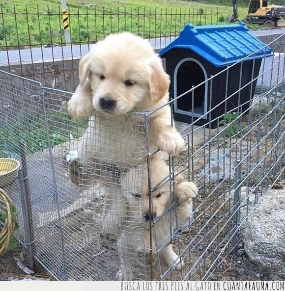 bebé,cachorros,jaula,perro