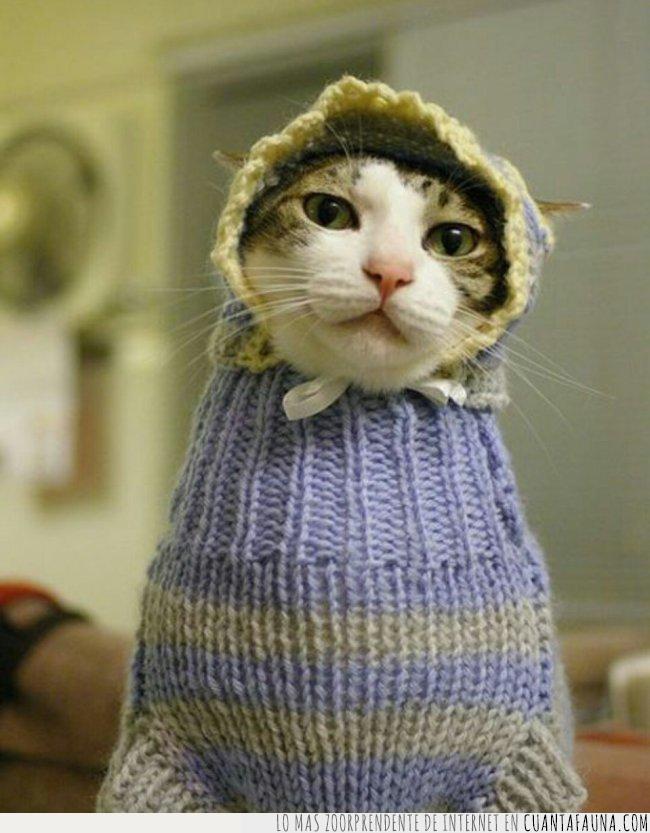 abrigar,abrigo,afrontar,estilo,frío,gato,gorro,gris,jersey,lazo,lila,punto,rayas