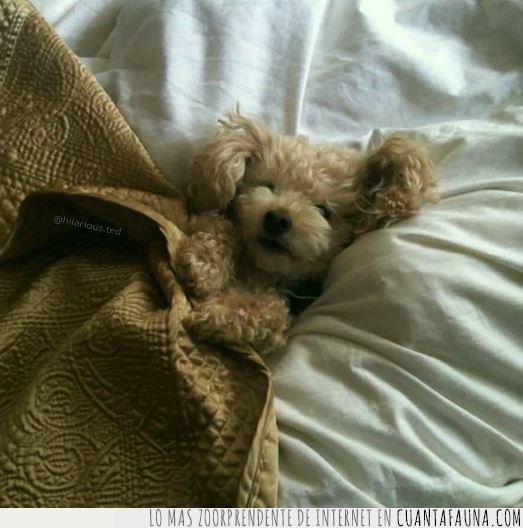 cama,descansar,dormir,frío,mantas,noche,perro,planes,sábado,sábanas