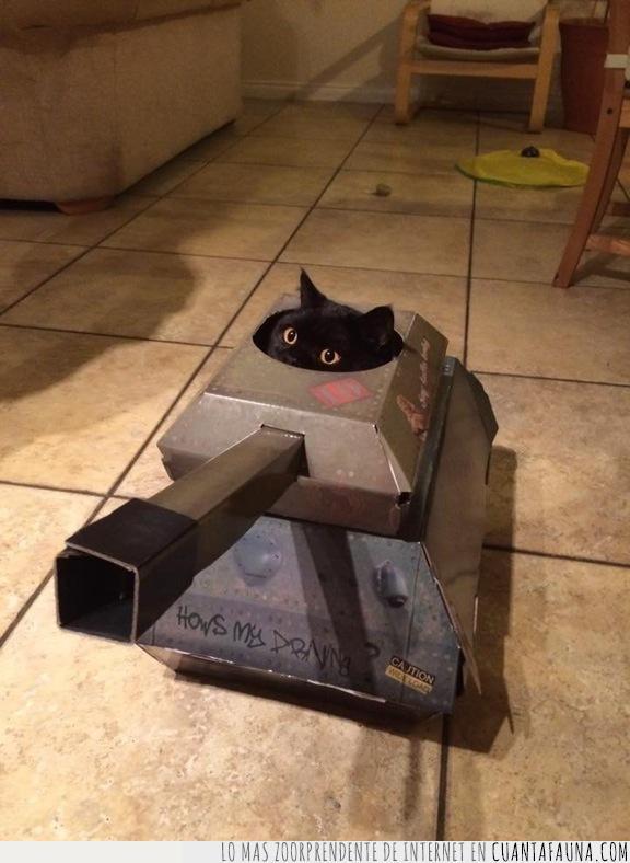 acabar,afrontar,asimilar,fin de semana,gato,tanque