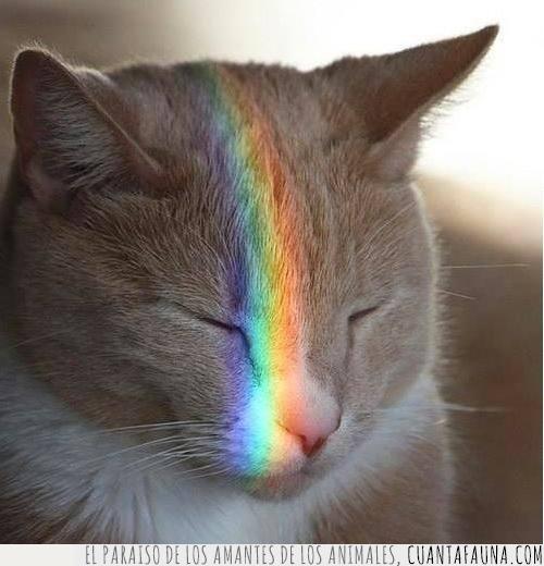 arcoíris,cabeza,cerrados,día,iluminar,luz,ojos