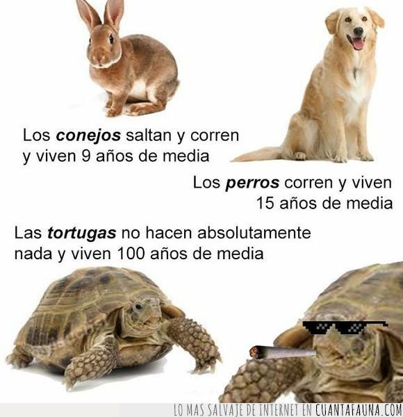conejos,larga,perros,tortugas,vida