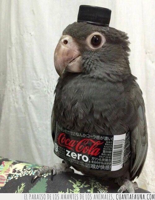 cocacola,disfraz,etiqueta,nuevo,pájaro,sabor,tapón