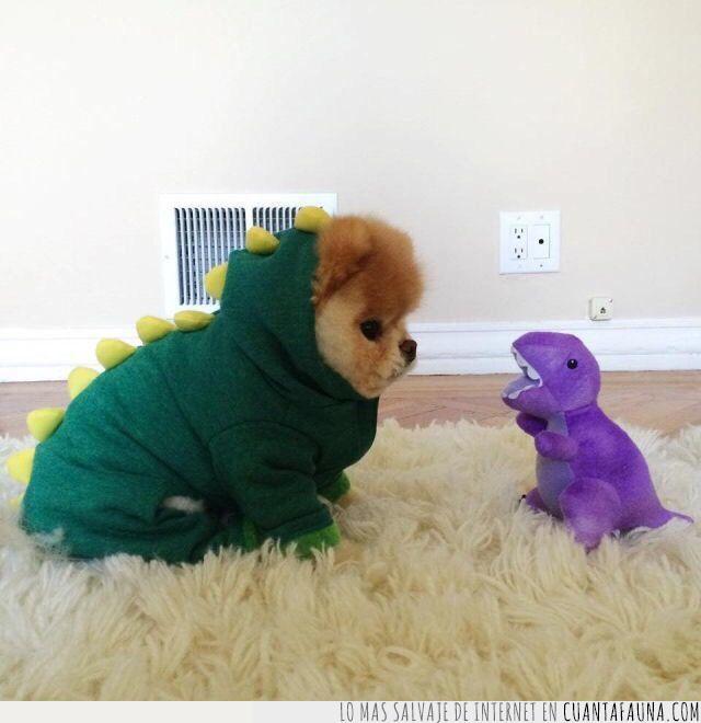 dinosaurio,disfraz,especie,foto,juguete,lila,morado,nueva,peluche,rara,verde