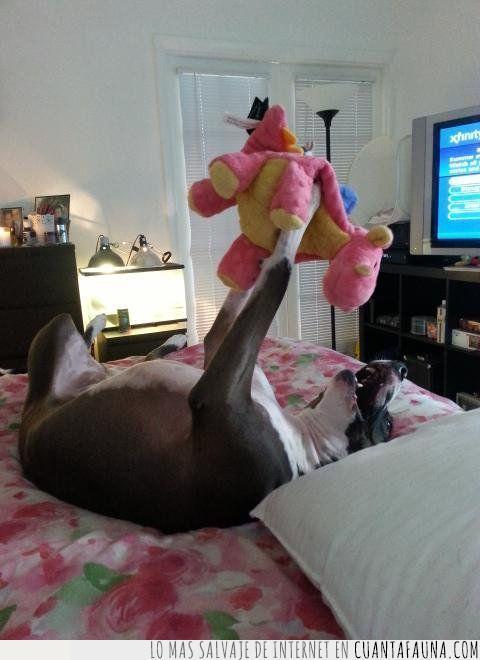 dragón,encantar,jugar,juguete,peluche,perro,rosa