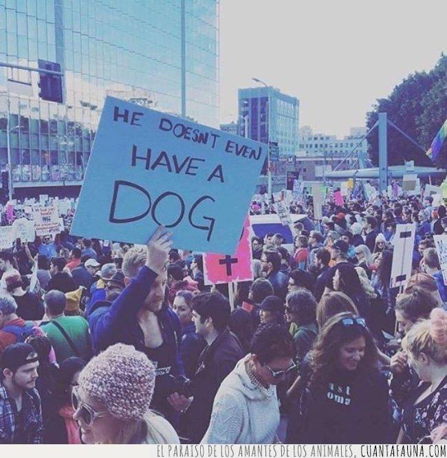 anti,convencer,convincente,estados unidos,manifestación,marcha,mujeres,pancarta,perro,presidente,trump