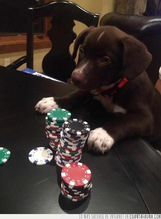 apostar,apuesta,doblar,fichas,huesos,juego,jugar,merienda,póker,subir