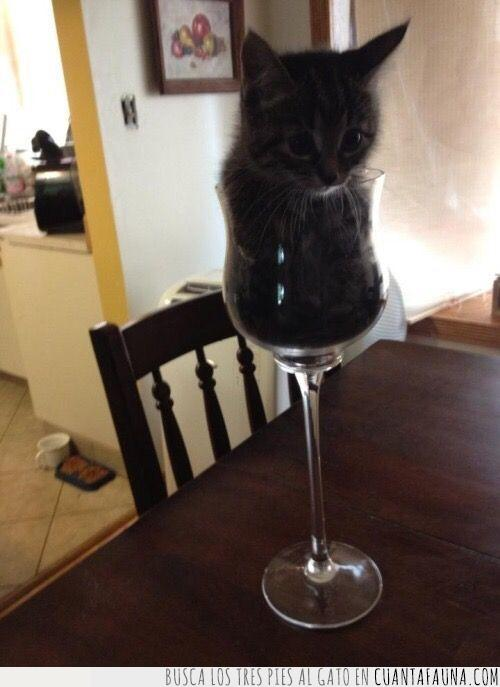 apetecer,copa,día,final,gato,tomar,única,vino