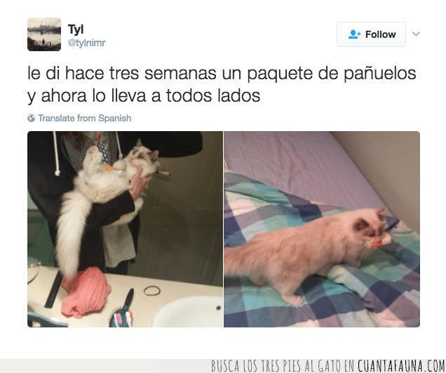 dar,gato,pañuelo,perfumados,regalo