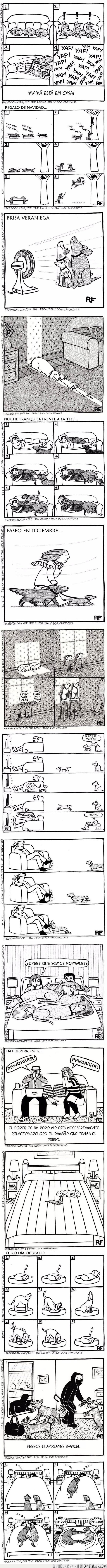 mascotas,perros,vida